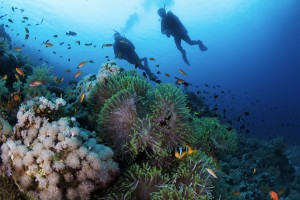 Two divers scuba diving in the Meiterranean in Egypt