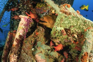 Moray Eel in coral seen while dining in the Mediterranean Sea