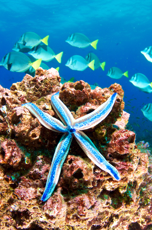 Diving on a luxury Galapagos yacht charter vacation with Worth.