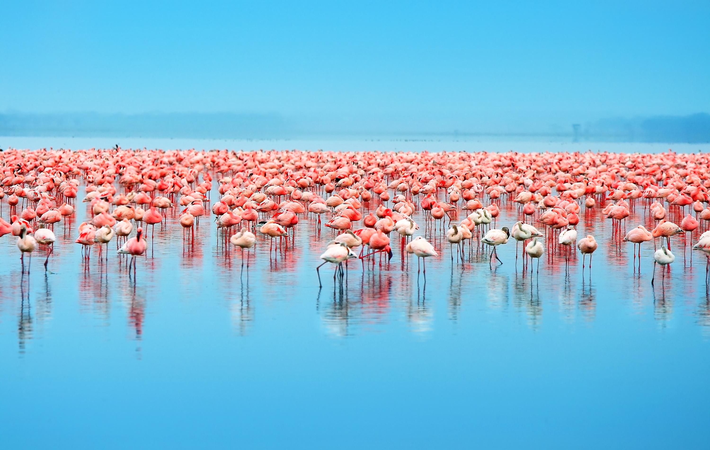 Luxury yacht charter vacation Galapagos. Galapagos flamingos.