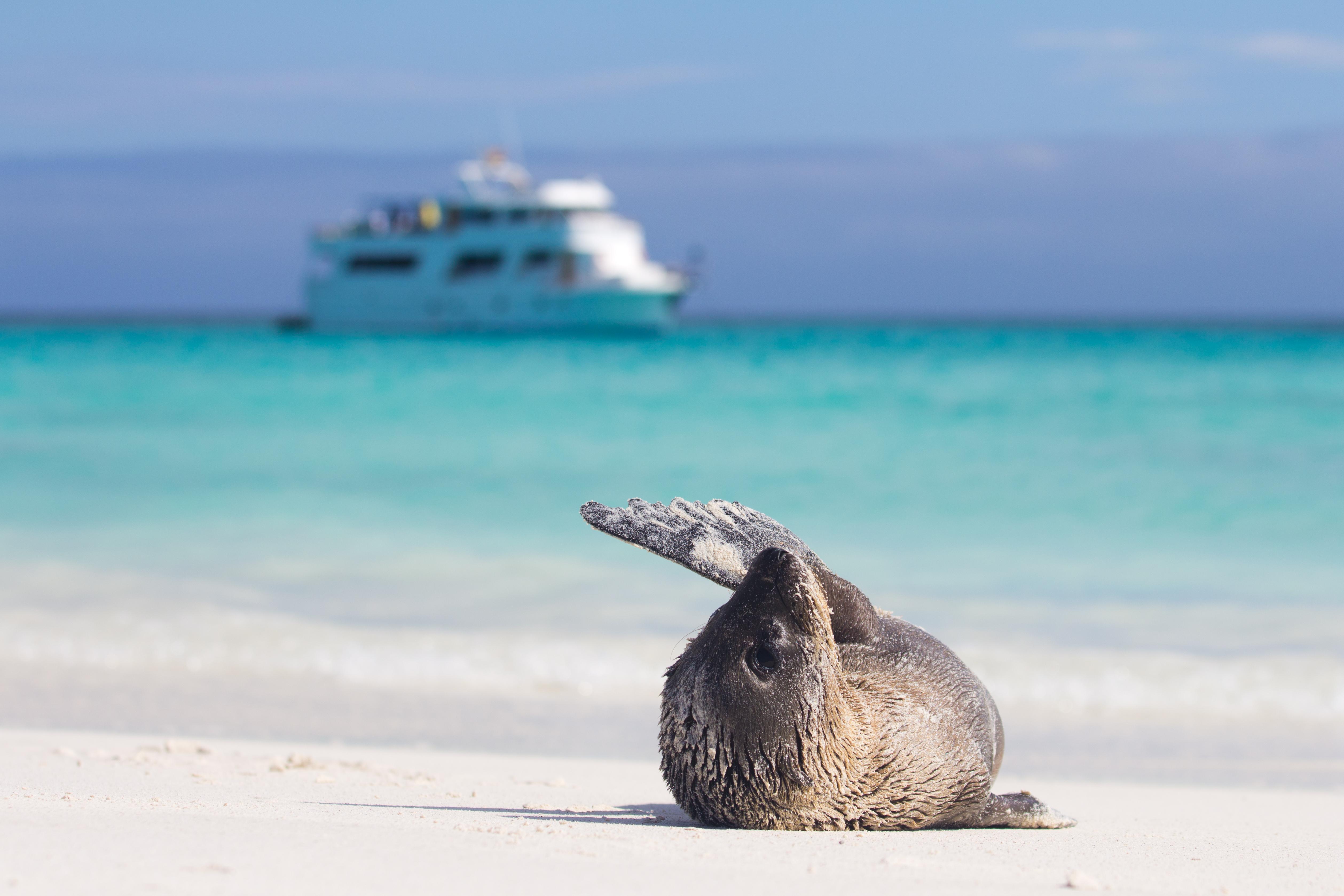 Luxury yacht charter Galapagos. Sea lion.