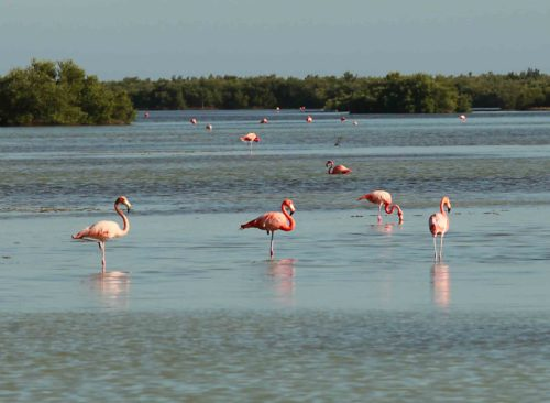 Cuba - flamingos - Worth Avenue Yachts