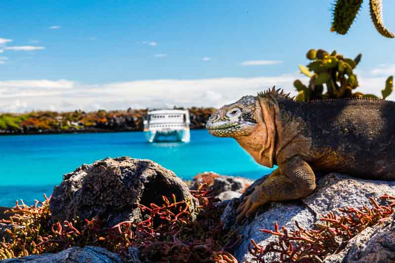 Luxury Yacht Charter to the Galápagos Islands