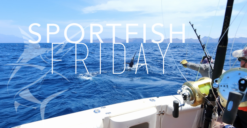 Sportfish Friday