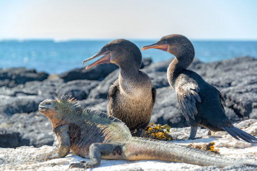 Exotic animals on a Galapagos yacht charter