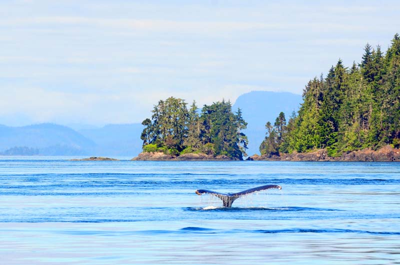 View of a whale on British Columbia yacht charter