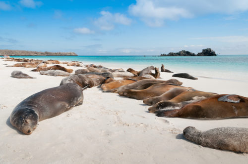Sea lions lying on a beach on Galapagos yacht charter