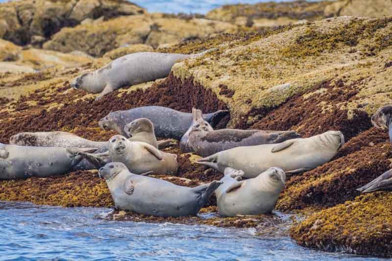 Seals on a coastal Maine yacht charter