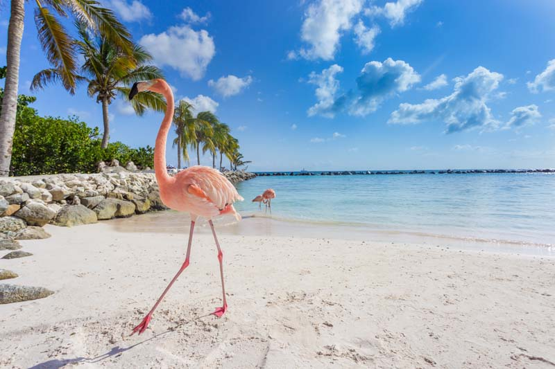 Flamingos on a beach in ABC Islands yacht charter