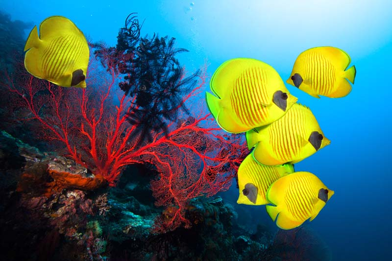 Fish and coral reef on Bahamian Out Islands yacht charter