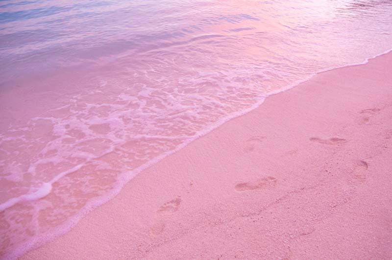 Conception Island pink beach on Bahamian Out Islands yacht charter