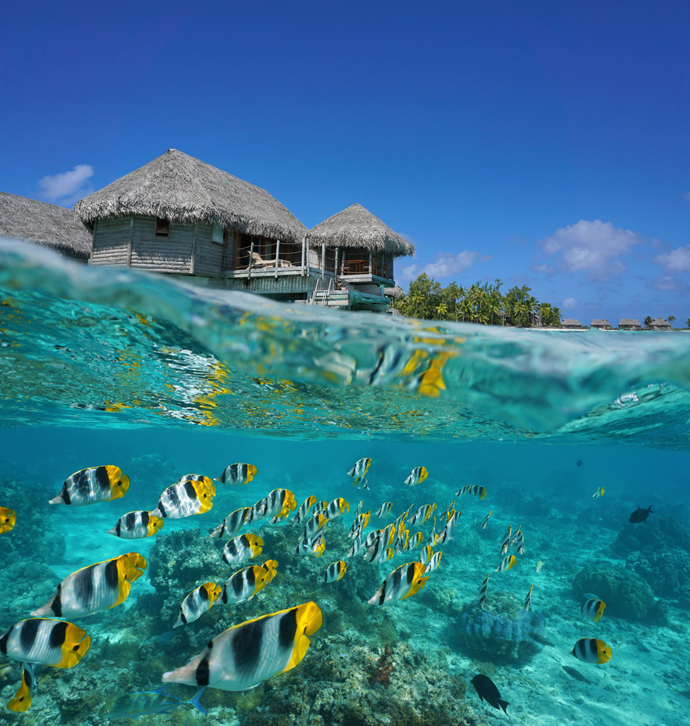 School of fish and traditional hut, French Polynesia yacht charter
