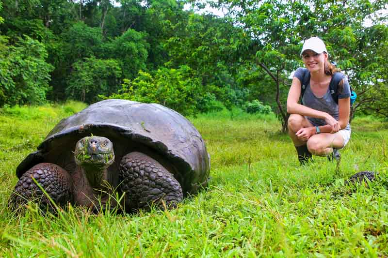 Giant tortoise on a Yacht Charter Itinerary Galapagos 1