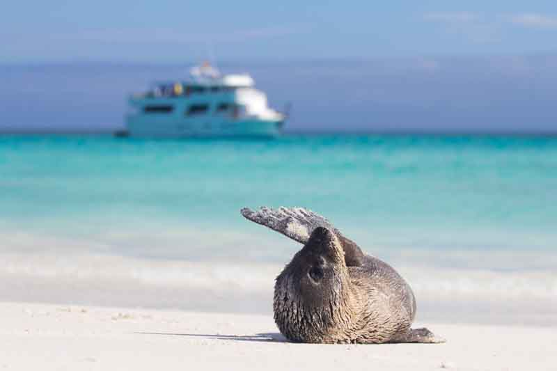 Seal on a beach during a yacht charter itinerary in the Galapagos 1