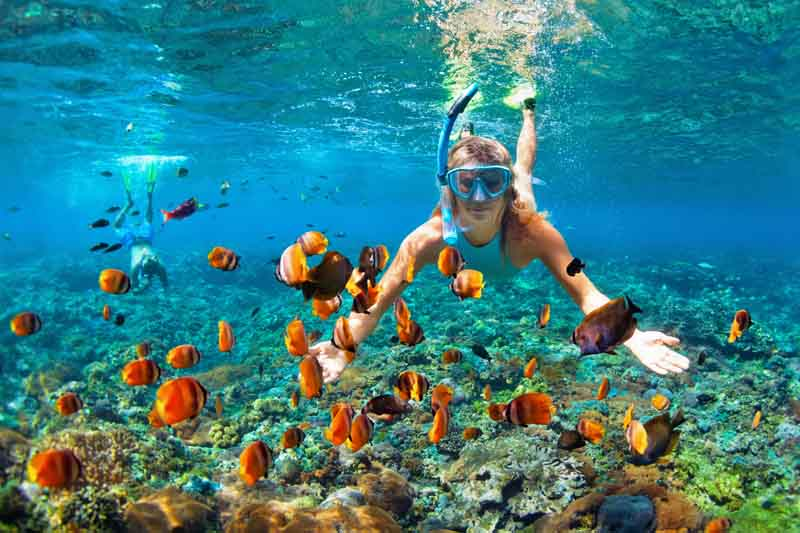 Snorkelling with fish on a yacht charter itinerary Grenada