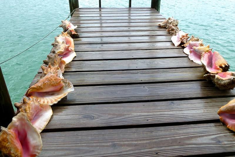 Dock lined with shells on a yacht charter itinerary Bahamas