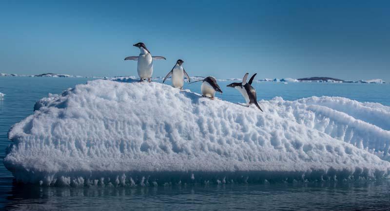 Penguins on an Antarctica yacht charter