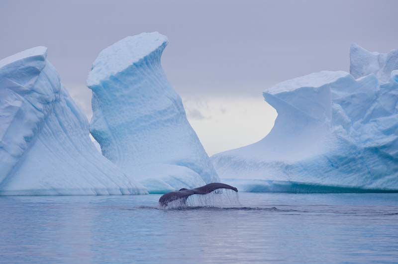 Antarctica yacht charter whale sightseeing