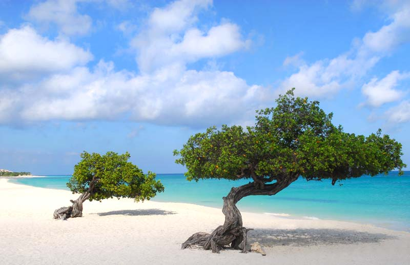 Eagle Beach in Aruba on ABC Islands yacht charter