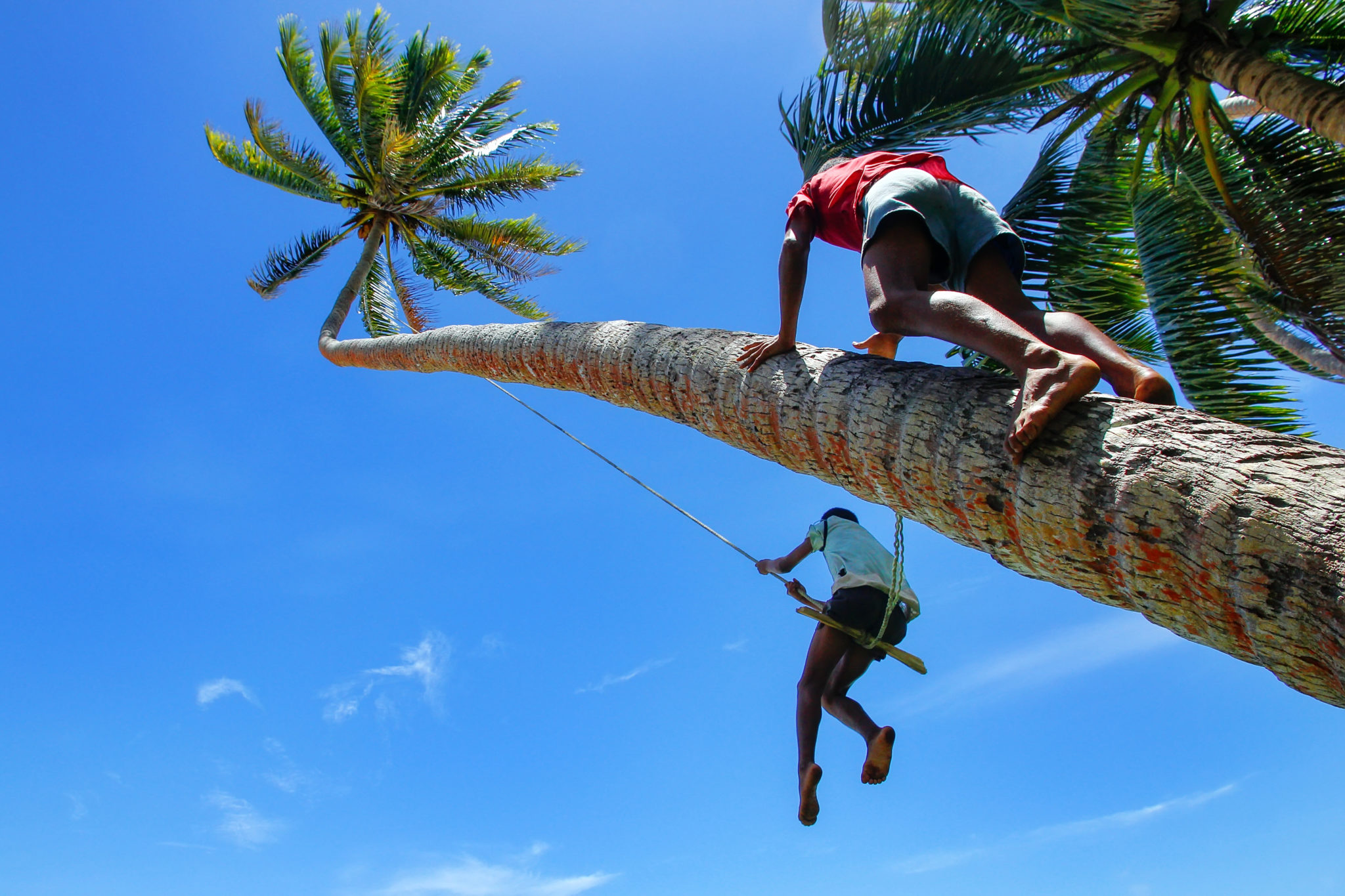 Men climbing palm tree on Fiji yacht charter