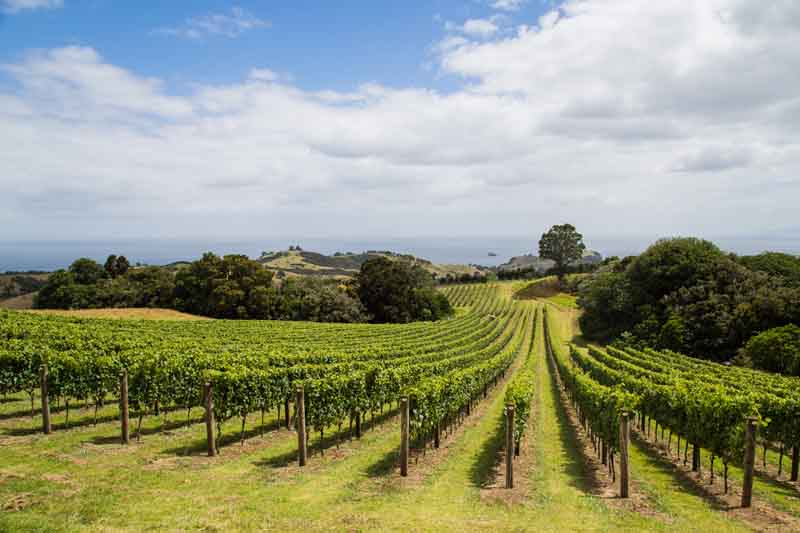 Vineyards on New Zealand yacht charter