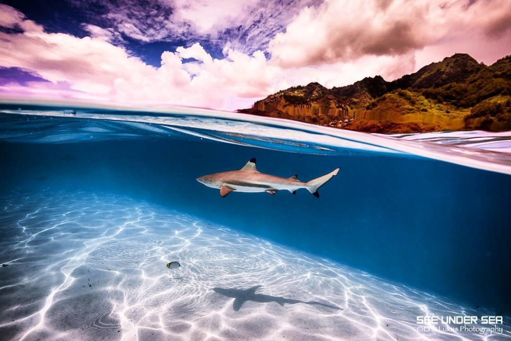 Swimming with sharks on a Tahiti yacht charter