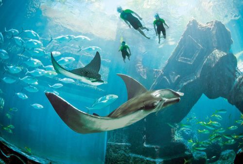 Ruin diving on a yacht charter itinerary in the Bahamas