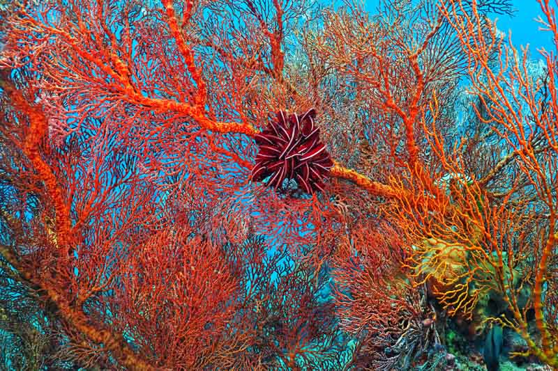 Red coral on a yacht charter itinerary Fiji