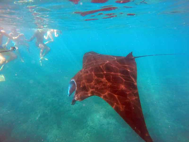 Diving with stringrays on a yacht charter itinerary Fiji