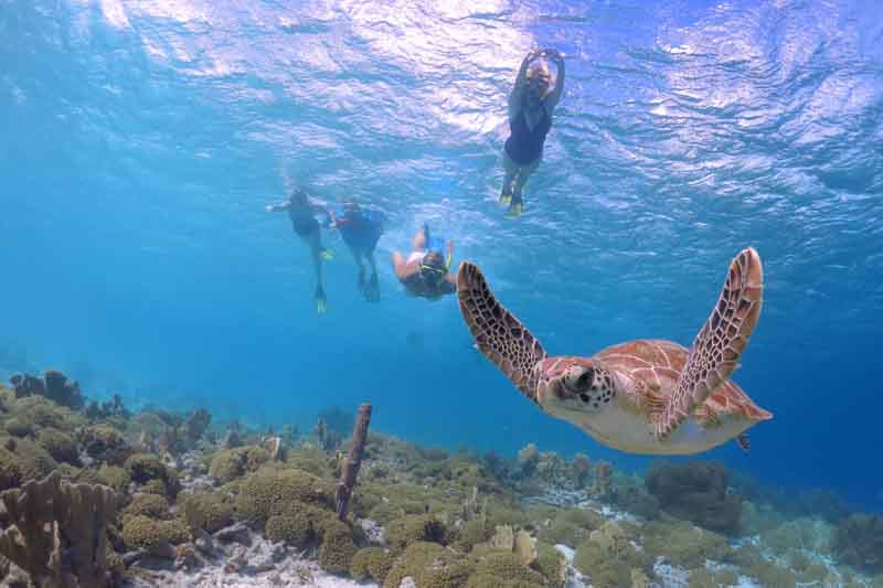 Diving with turtles on a yacht charter itinerary French Caribbean