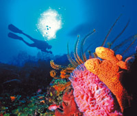 Snorkelling in Mustique on a yacht charter itinerary St Lucia