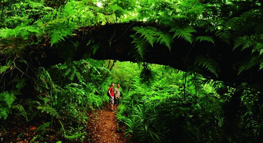 Hiking in the rainforest on a yacht charter itinerary Tahiti